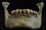 Загадка доисторического сибиряка раскрыта канадским синхротроном