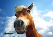 Пограничники задержали табун лошадей