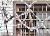 ООН впервые рассмотрит жалобу на условия в тюрьме на Окрестина