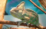 В Минске открылся первый контактный зоопарк с рептилиями