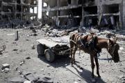 Боевики ИГ начали использовать ослов-смертников