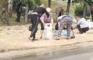 Фотофакт: Жители Барановичей гребли комбикорм с земли руками