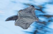 Как орнитологи нашли в белорусском лесу самого «няшного зверька»