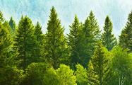 В Беларуси из-за жука-короеда вырубят больше 12 тысяч гектаров леса