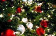 Большинство горожан планируют встретить Новый год дома