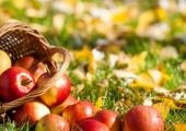 Беларусь заняла первое место по импорту украинских яблок