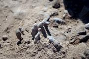 Боевики ИГ казнили 30 эфиопских христиан в Ливии
