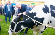 Лукашенко: Некоторые считают, что лошадь - это тоже корова