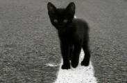 Маленький котенок стал причиной аварии трех машин под Минском