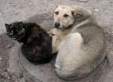 Зоозащитники требуют принятия закона «О защите животных»