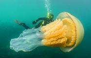 Ученые превратили обычную медузу в киборга