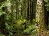 Ураган повредил более тысячи гектаров леса