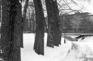 В минском парке им. Горького пока спилят лишь три дерева