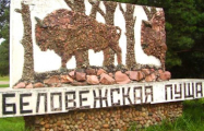 Белорусы и поляки создадут мультфильм о Беловежской пуще
