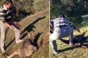 Китаец в Австралии перерезал горло беспомощному кенгуру