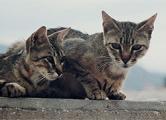 Живодер из Барановичей расстреливает кошек