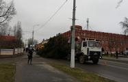 В Полоцке уронили новогоднюю елку
