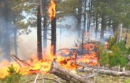 На Гомельщине продолжают гореть леса и торфяники