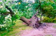 Ураган в Минске