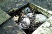 Скотомогильники Могилевской области находятся в неудовлетворительном состоянии