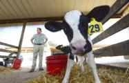 Россельхознадзор вернул в Беларусь 180 тонн сухого молока