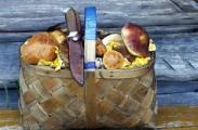 Жертвами грибов в Беларуси стали 88 человек