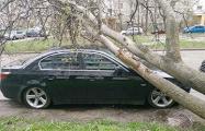 В Минске от сильного ветра падают деревья