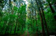 Под Минском на месте леса хотят выкопать огромный карьер