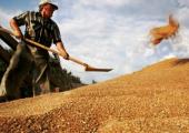 Урожай зерновых – на 20 процентов больше, чем в прошлом году