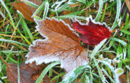 Ночью в Беларуси будут заморозки до -4°С