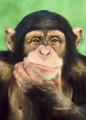 Главное отличие обезьян от человека поставили под сомнение