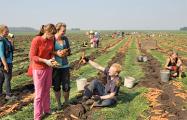 Белорусских студентов отправили работать в колхозы
