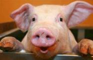 За пикет против свинокомплексов под Молодечно - штраф 40 базовых