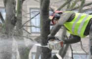 Жители Светлогорска возмущены вырубкой деревьев в городе