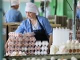 Россельхознадзор вернул в Беларусь 220 тысяч яиц
