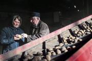 Инициативу Путина о развитии картофелеводства и птицеводства поддержат грантами