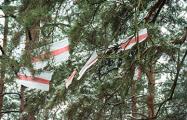 Бело-красно-белые леса Беларуси