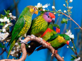 440 задержанных в Мозыре попугаев предлагается отдать в детские дома