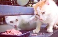 Жадный кот стал звездой Сети