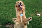 Летящего в прыжке пса превратили в рок-звезду и медведя