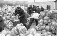 Как в СССР отправляли людей в поле и на «овощные базы»