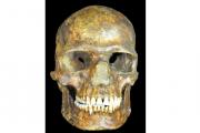 Геном древнейшего человека из России пролил свет на колонизацию Евразии