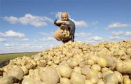 Жара бушевала: будем ли в этом году с картошкой, яблоками и хлебом?