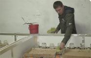 Как белорусский предприниматель выращивает сверчков на протеиновые батончики