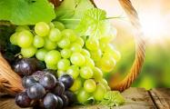 Виноград в Беларуси выращивали уже тысячу лет назад